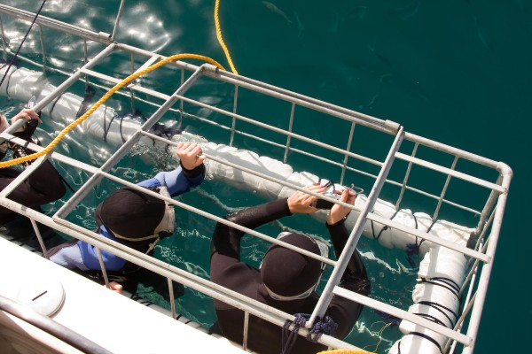 Permit for Shark-cage diving and Whale Watching - by DMC South Africa